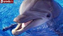 Дельфины НАТО покорят Чёрное море?