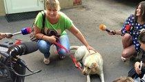 Украденную собаку-поводыря искали всей Москвой