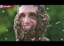 Борода из пчёл: страшно красиво