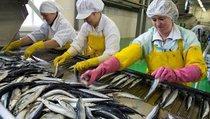 """""""Законы обеспечат качество рыбы на прилавках"""""""