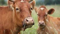 Александр Ежевский: Сельское хозяйство — голодный кормилец большой страны