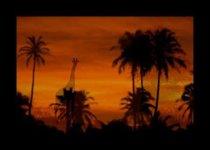 Чарующая красота Африки