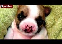 Уродливый щенок покоряет интернет