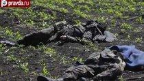 Украинская армия убивает своих
