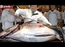 Гигантский тунец за 70 тысяч долларов