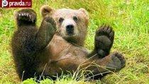 1 против 3000: Медведь сорвал учения армии Финляндии
