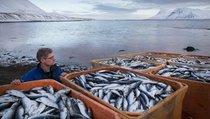 """""""Рыбная отрасль обеспечивает продовольственную безопасность России"""""""