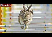 Кролики: быстрее, выше, сильнее!
