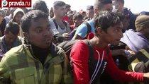 Россия готова принять беженцев из Сирии