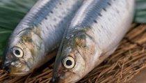 """Почему рыба из России становится """"золотой""""?"""