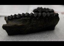 Древнейшие окаменелости обнаружили в Панаме
