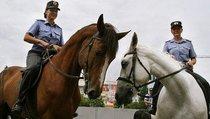 Как работает конная полиция?