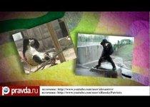 Минута славы для орангутана