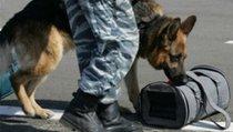 К-9: Собачья работа в России