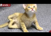 Врачи спасли хромого котёнка