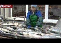 """Радиоактивная рыба из Японии """"засветится"""" в России?"""