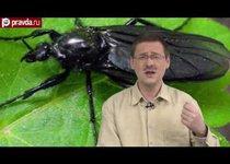 Нашествие мух в Москве: бояться не стоит