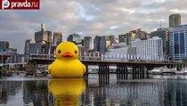 """В Нью-Йорк плывет гигантский """"утёнок мира"""""""