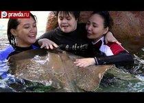 Акулы и скаты лечат детей-инвалидов
