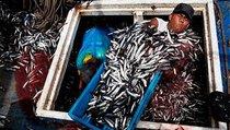Сахалинские инициативы в рыбной отрасли как фундамент для развития прибрежных территорий