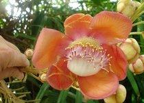 Top 10. Самые красивые цветы в мире