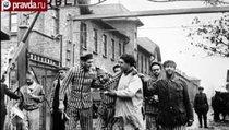 """""""Заявления об освобождении Освенцима украинцами — это идиотизм"""""""