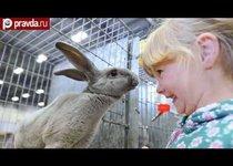 Самые красивые кролики мира