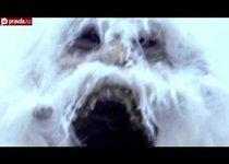Снежный человек: медведь, примат или инопланетянин?