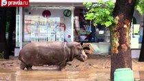 Наводнение в Тбилиси: 312 жертв