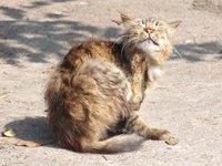 для кошек и собак Агроветзащита Барс - Как вывести блох у кошек.