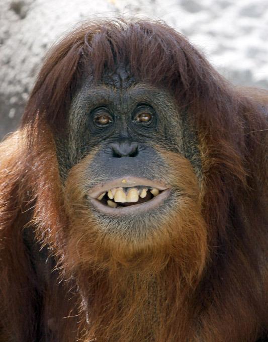 фото страшных обезьян